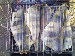 Терпуг на мангале рецепт с фото