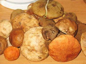 свежие лесные грибы: подберёзовики, подосиновики, моховики