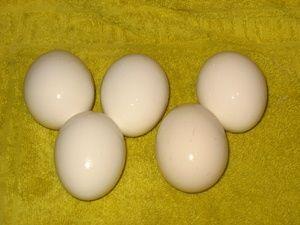 варёные яйца для покраски красителями