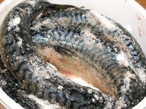 скумбрия с солью