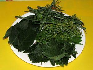 зелень для консервирования огурцов