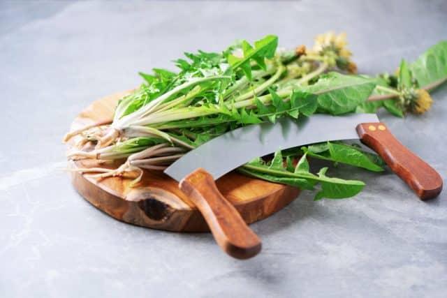 одуванчик для салата
